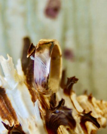 кольцо из дерева березы и смолы